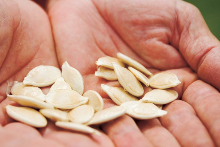 Pumpkin Grower Seeds