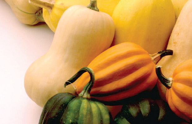 Warm Up to Winter Squash