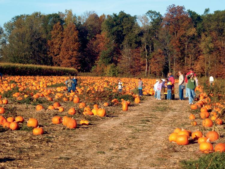 Pick A Peck Of Pumpkins At Harper Valley Farms Farm Flavor