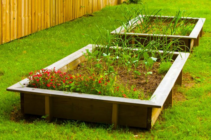 An urban backyard garden with raised beds growing vegetables