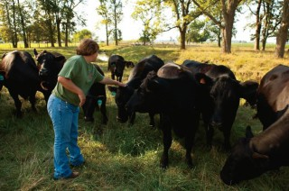 Dougherty Farm Fresh Beef in Indiana