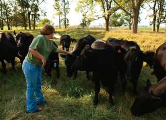 Dougherty Farm Fresh Beef in Indiana