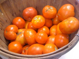 bucket of Mom's tomatoes