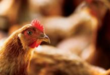 Alabama Poultry technology