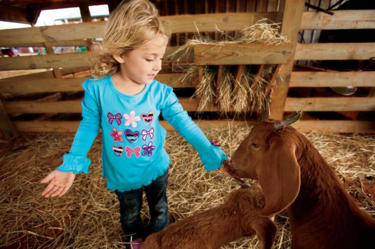 Children feed goats at Tate Farm near Meridianville Alabama