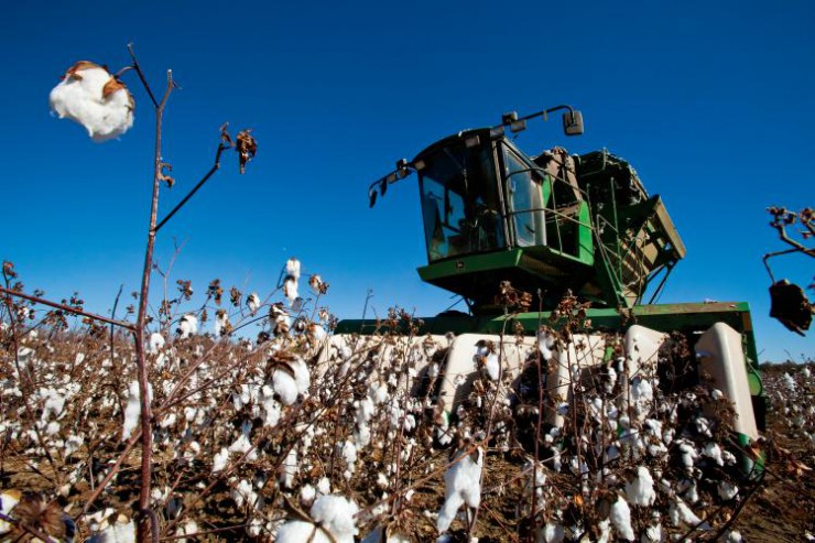 United States agriculture cotton