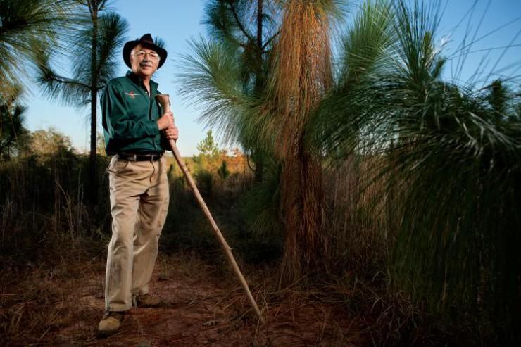Dr. Salem Saloom works with longleaf pines