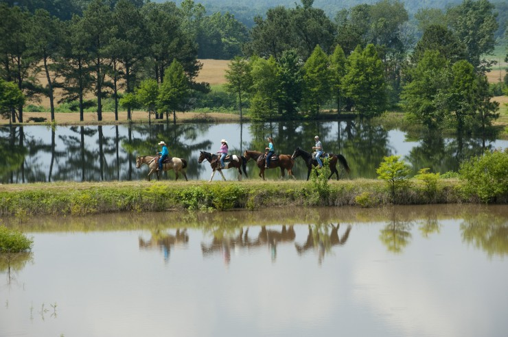 Horses in West Tennessee