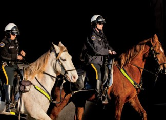 Nashville Horse Mounted Patrol Unit