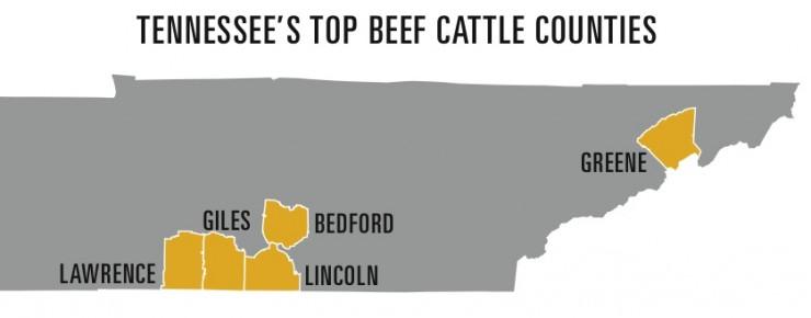 tn top beef cattle counties