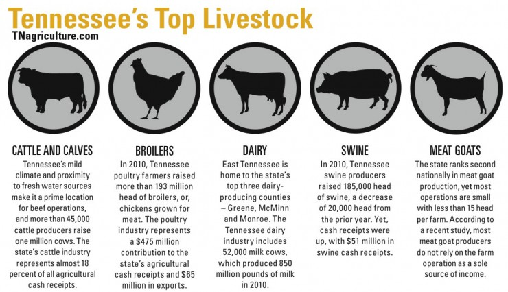 Tennessee top livestock