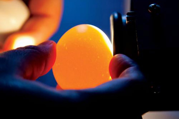 Illinois Egg Safety Inspection
