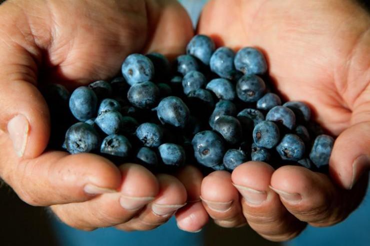 Georgia Blueberries