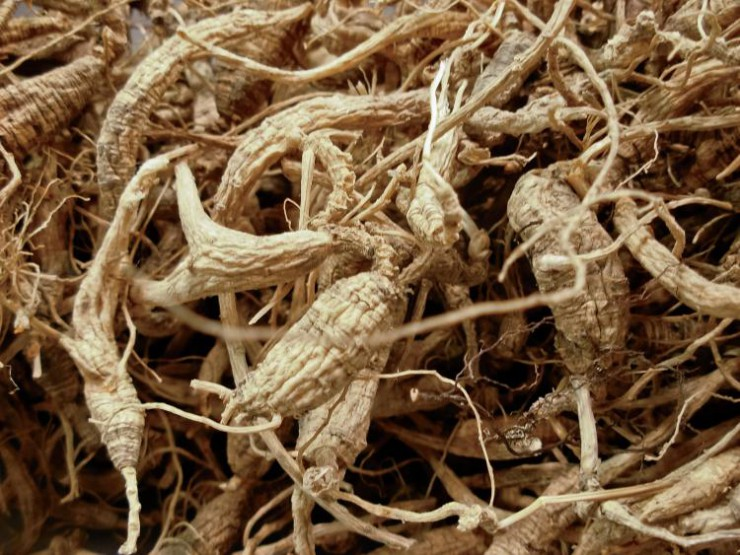 Ginseng In Illinois Map.Plenty To Root For In Kentucky Ginseng Exports Farm Flavor