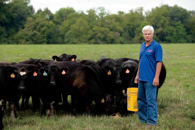 Kentucky Beef Industry