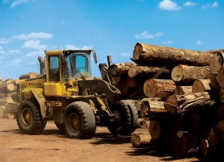 Kentucky Lumber and Timber Industry