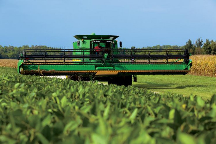 Kentucky Corn and Soybeans