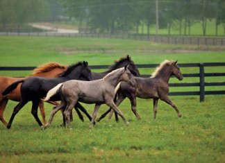 Kentucky Equine Industry