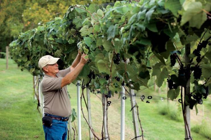 Kentucky's Wineries