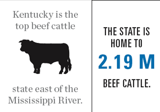 Kentucky Beef Industry Graphic
