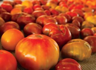 Tastier Winter Tomatoes
