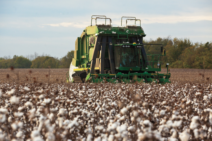 Cotton Farmers Use Corn To Increase Profitability Farm