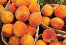 Alabama peaches