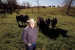 Missouri's Cattle Industry