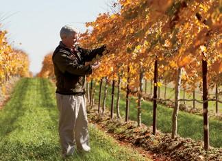 Arkansas Wine