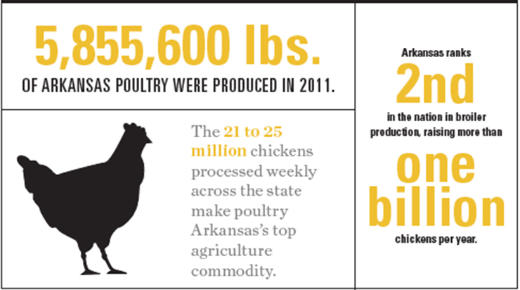 Arkansas Poultry Graphic