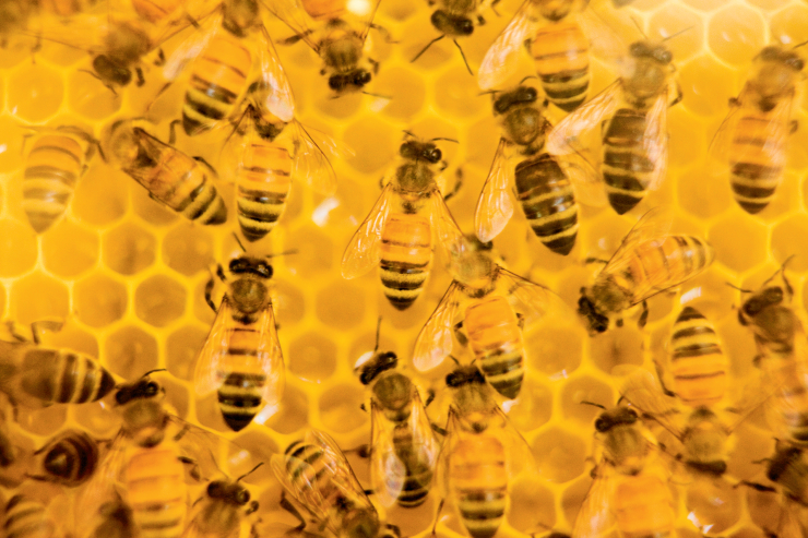 Missouri Bees