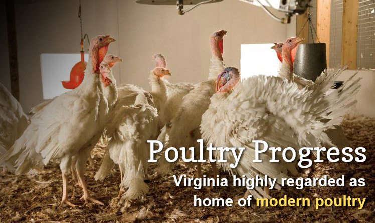 Virginia Poultry