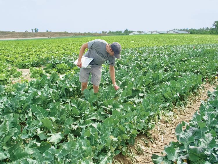South Carolina Broccoli Research