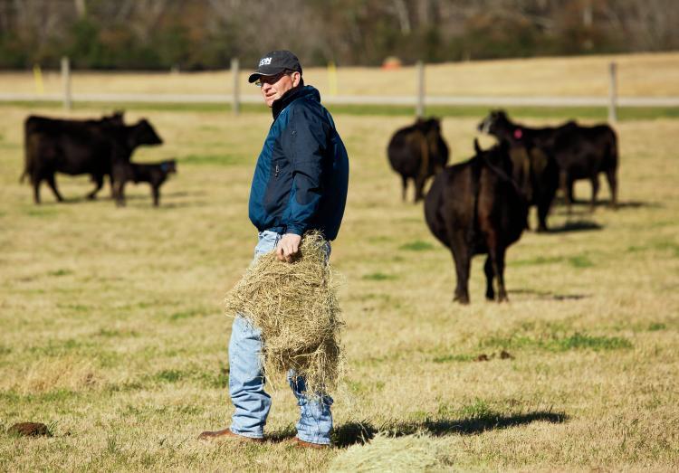 South Carolina Beef