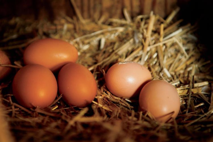 South Carolina Poultry