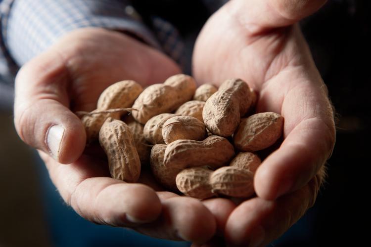 South Carolina Peanuts