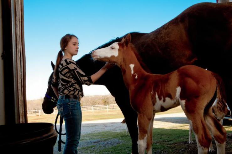 Oklahoma Equine
