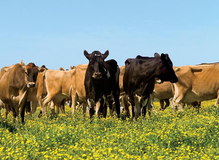 Visit an Illinois Farm