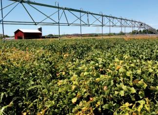 Illinois Soybeans