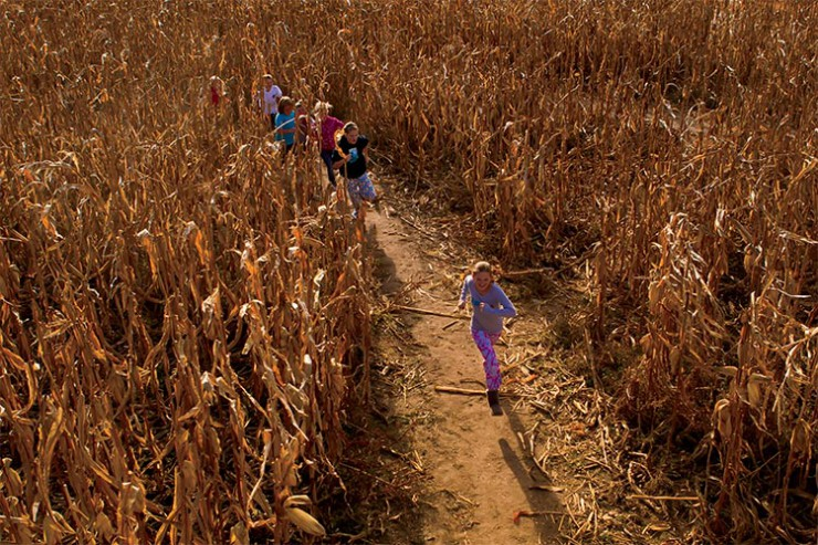 Corn Maze Designs