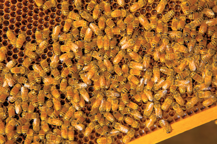 Make sure black spots are not bees flying.