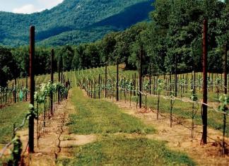 Georgia Wine