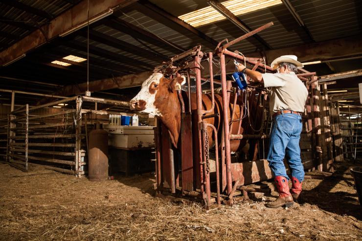 Texas farm families