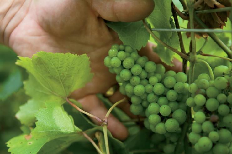 Andy Toutman/Wolf Creek Winery
