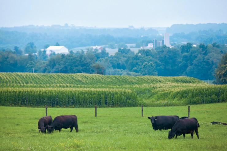 Livestock Genetics