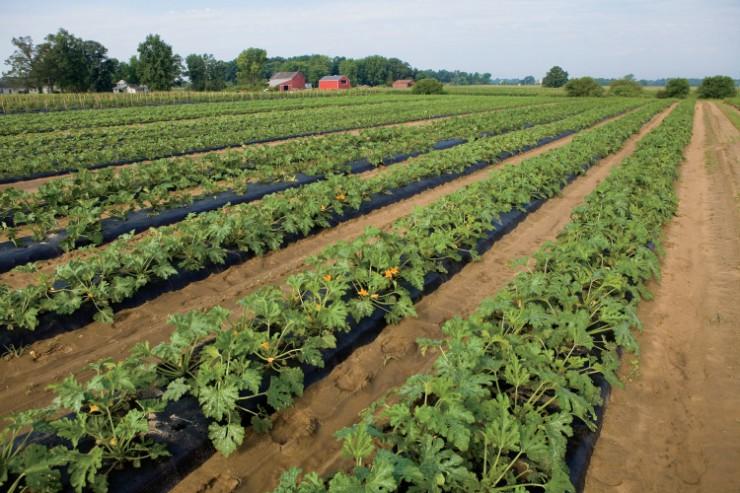 Ohio The Chef's Garden