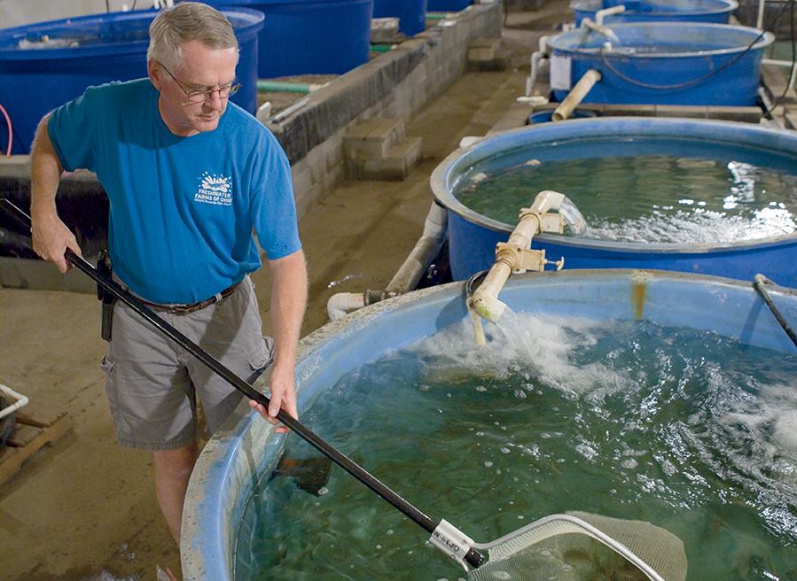 Ohio aquaculture flourishes farm flavor for Fish farms in florida