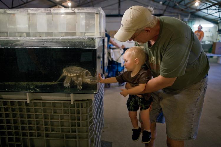 Ohio Aquaculture Flourishes   Farm Flavor
