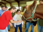 Therapeutic Riding in Mississippi