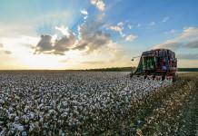 Mississippi export cotton